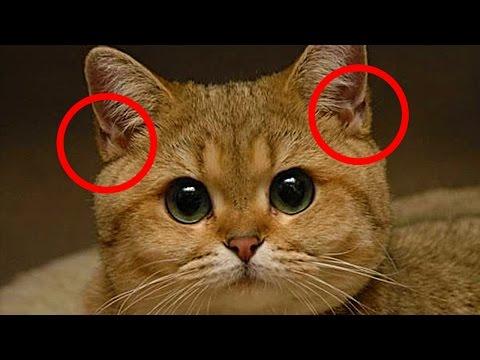 Вопрос: У кошки ломаются и выпадают вибриссы что делать?