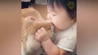 赤ちゃん素晴らしい動物 ハッピー・ヴァインズ・コンパイル このビデオ...