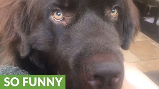 Dog makes it clear what he wants from owner