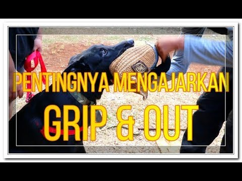 Kitmir,  Grip & Out Training