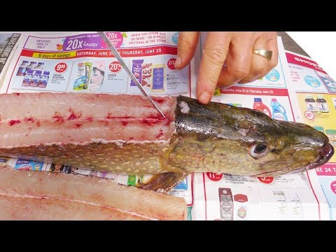 How to Fillet a Pike (and Get 5 Boneless Fillets!)