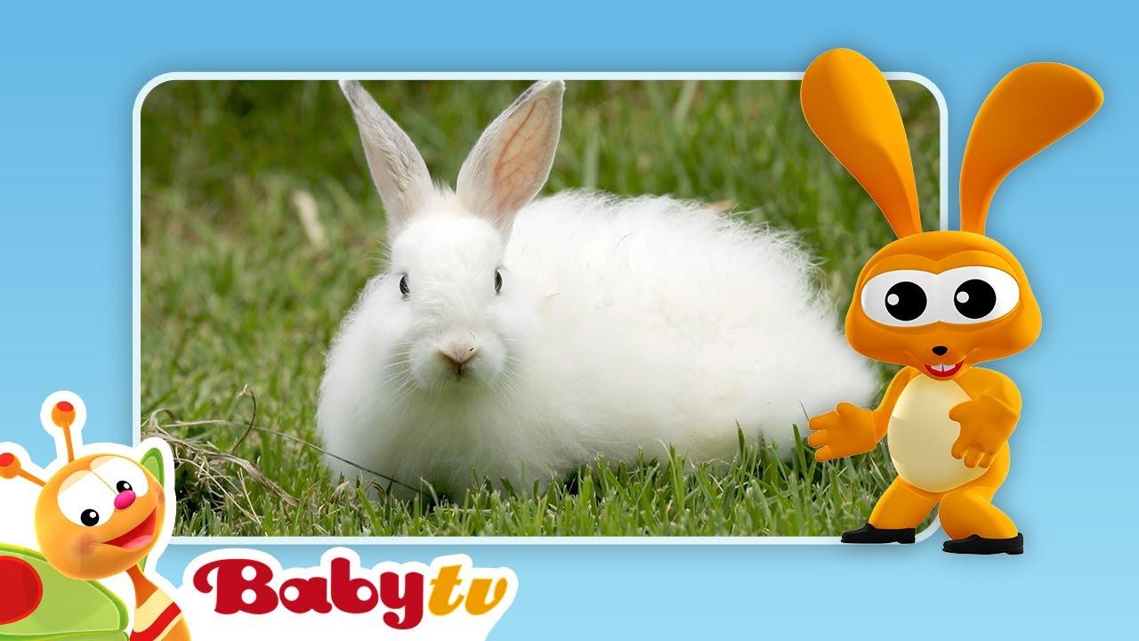 Download Rabbits 🐇🐇 | Fun with Animals | BabyTV