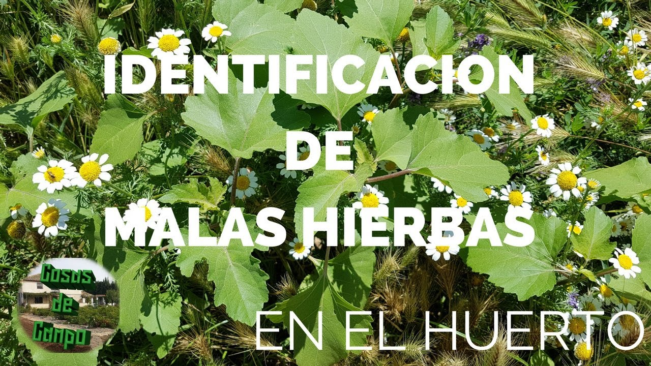 Identificar malas hierbas en el huerto o jard n en verano for El jardin de verano