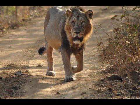 Saurashtra Ni Vanya Shrushti Gir Forest National Park Sasan - Part 1