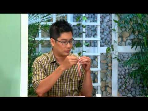 Khéo tay làm thiệp giấy xoắn - Thành Phố Hôm Nay [HTV9 -- 15.03.2014]