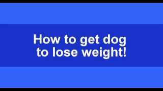 How to get dog to lose weight - FREE Calorie Calculator- FREE Mini Course