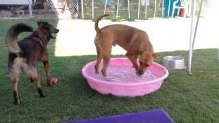 Coastal German Shepherd Rescue Oc Dogs Beating The Heat