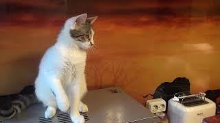 Кошка Симона в Москве в добрые руки