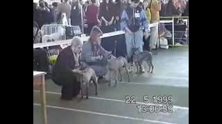 II Национальная выставка голых собак (ксоло) 22 мая 1999.avi