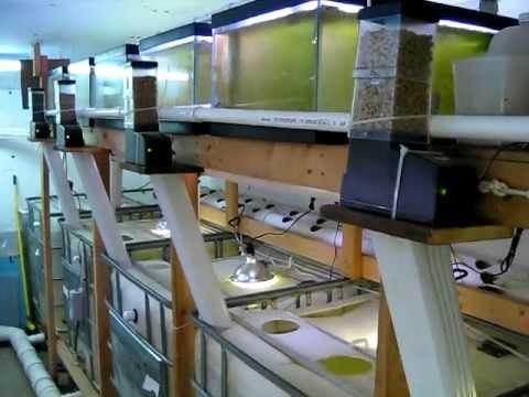 Diy Tilapia Small Scale Aquaculture System Vid 7 Youtube