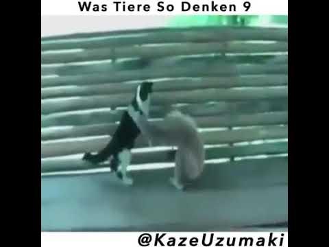 Was Tiere so denken