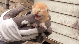 3-tiny-ginger-kittens-rescued-from-under-a-shed