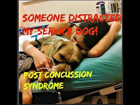 Concussion - Service Dog Distracted
