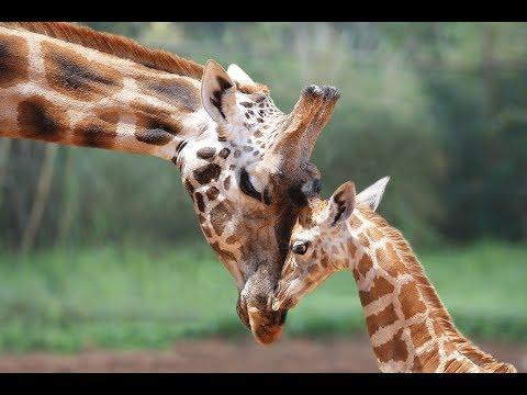 Panasonic G9  -  Zoo Safari Park