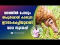Wow! Rare Indian Pangolin  Snake Master  Vava Suresh  Latest Episode