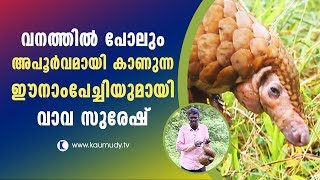 Wow! Rare Indian Pangolin | Snake Master | Vava Suresh | Latest Episode