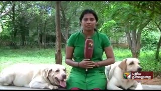 Special report: Trichy sniffer dog 'Tiger' wins gold medal