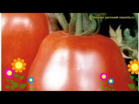 Томат обыкновенный Рубиновый Кубок. Краткий обзор, описание характеристик, где купить семена