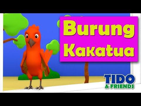 Lagu Anak Burung Kakatua | Lagu Burung Kakak Tua | Lagu  Anak Terbaru 2018