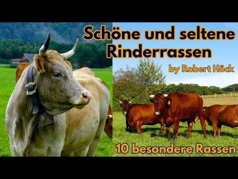 Schöne und seltene Rinderrassen - Eine Dokumentation über Kühe - Tiere Film von Robert Höck HD