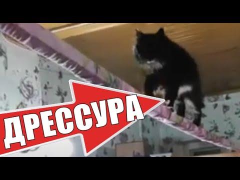 Дрессировка кота в домашних условиях умные животные 😻 Training a cat at home smart animals