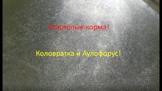 Стартовые корма-КОЛОВРАТКА и АУЛОФОРУС.