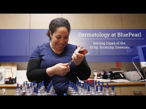 Dermatology At BluePearl