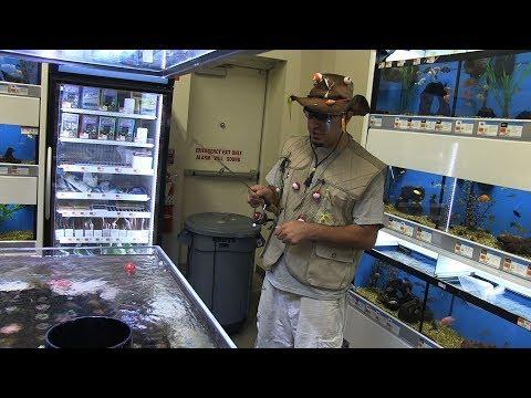 Fishing In PET Store Fish Tanks