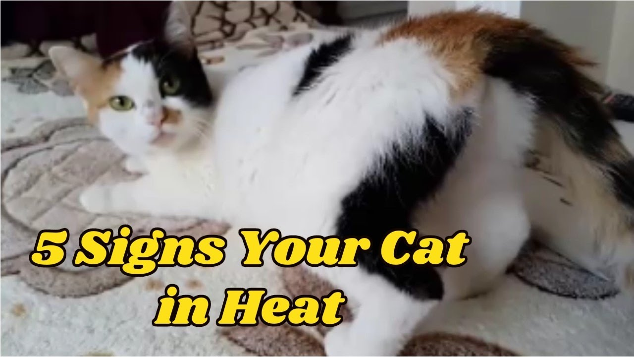 How Long Do Dogs And Cats Stay In Heat