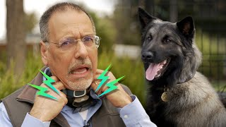 Dog shock collars: How they work & why you may NOT want one