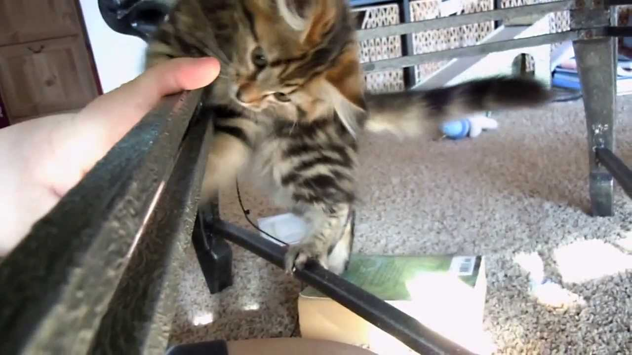how to get a kitten to stop biting when playing
