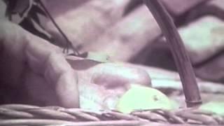Otok – film (Trinajstić)