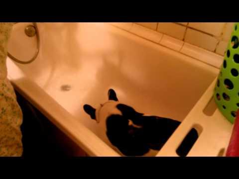 переставая степан и боня в ванной время подобрать