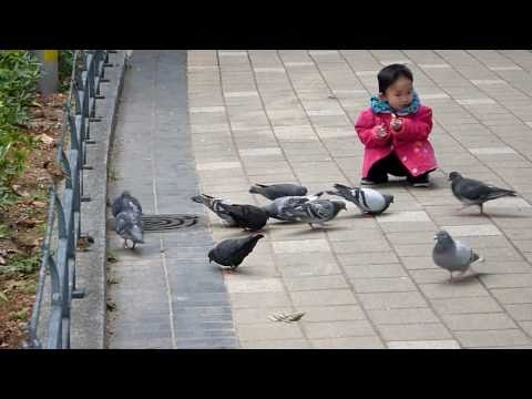 Ordinary Hong Kong People's Life: Kid and Pigeons 香港百姓日常生活之:小孩與鴿子