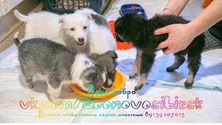 Приют для животных у которого нет ни одного спонсора animal shelter Дари добро Новосибирск