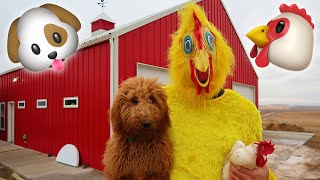 Goldendoodle Puppy VS. Chickens!