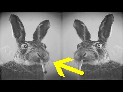 Thumbnail: Escaped Pet Rabbit Leads Cops To Pot Plants After He Keeps Coming Home High