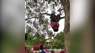Wedding photographer hangs upside-down from a TREE in order to land a perfect shot