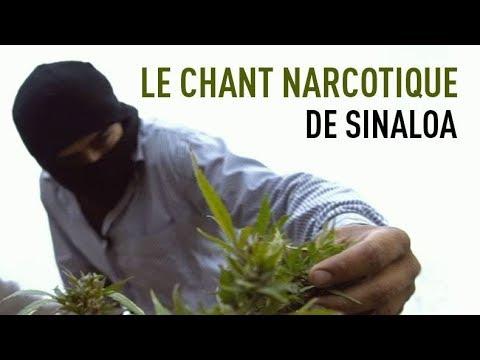 Le chant narcotique de Sinaloa (enquête spéciale)