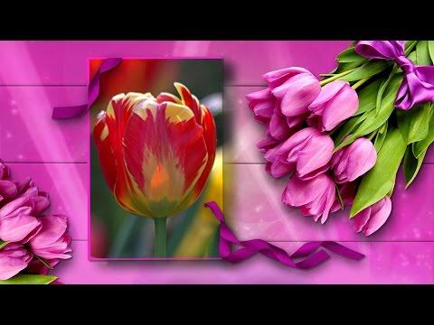 Тюльпаны для самой красивой!