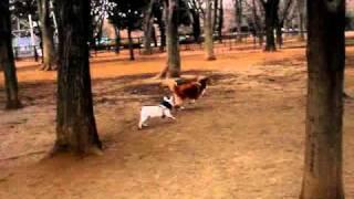 めちゃ楽しそうです。コロコロしている子犬なのですが、意外とスピード...