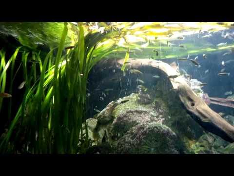 ZSL London Zoo | Aquarium (4)