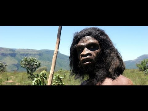 Ape To Man | Theory of Evolution Documentary