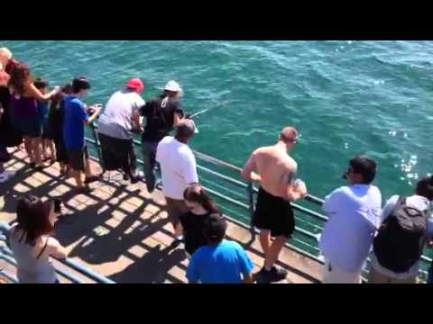Santa Monica Pier Shark Catch