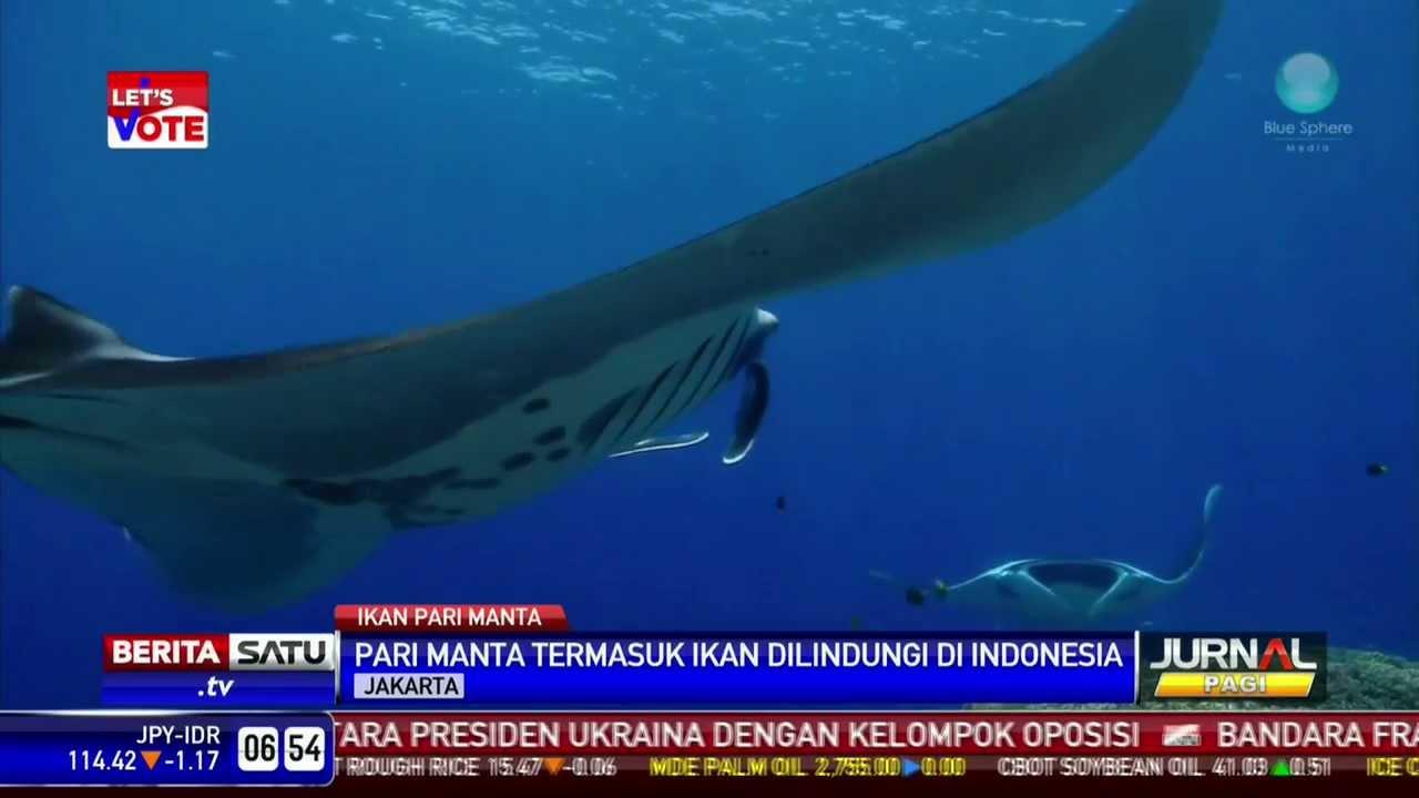 Download 850+ Gambar Ikan Pari HD Gratis