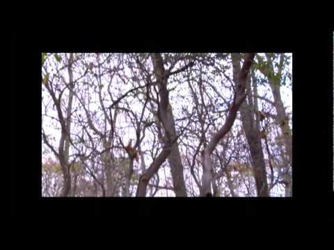 The Silver Key 2010 Full Movie.flv