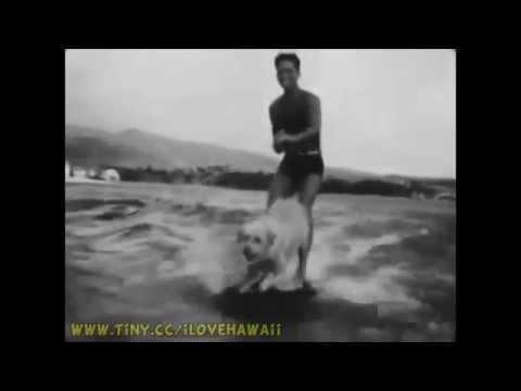 Amazing Surfing Dog in Waikiki Diamond Head Hawaii