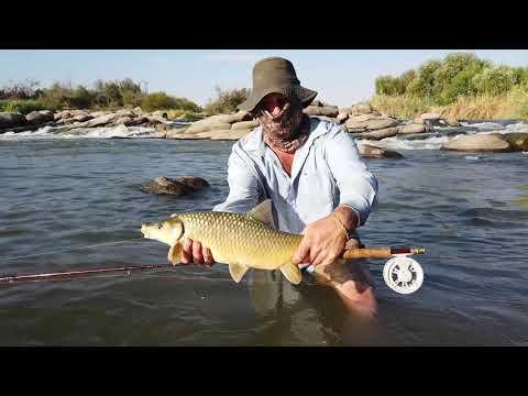Orange River Flyfishing 2019, Monster Smallmouth Yellowfish.
