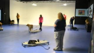 Michigan Dog Training Group Class Learns - Go To Place