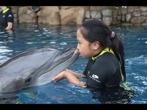 DOLPHIN ENCOUNTER @ SEAWORLD SAN ANTONIO DISCOVERY POINT